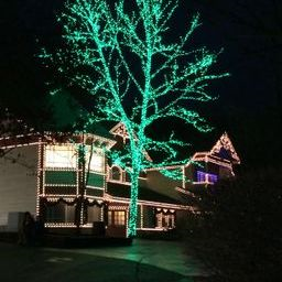 Green tree dollywood